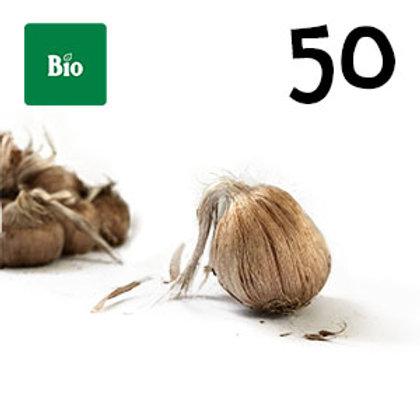 50 bulbi bio crocus sativus misura 10-11