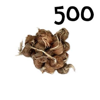 500 bulbi crocus sativus misura 8-9