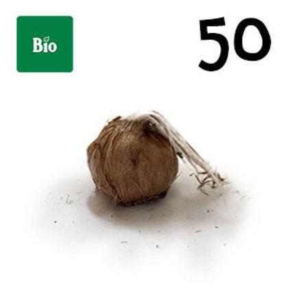 50 bulbi bio crocus sativus misura 11+