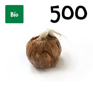 500 bulbes biologique crocus sativus calibre 7-8
