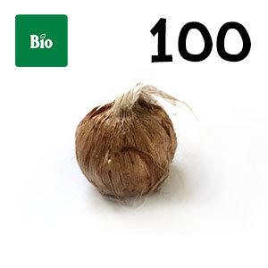 100 bulbes biologique crocus sativus calibre 7-8