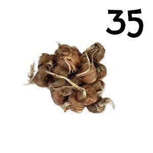 35 bulbes crocus sativus calibre 8-9