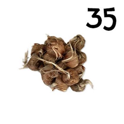 35 bulbi crocus sativus misura 8-9