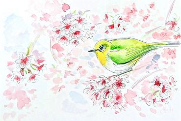 aquarelle-oiseau_edited.jpg
