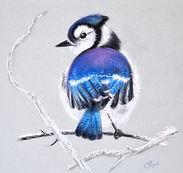 pastel-oiseau%2520hiver_edited_edited.jp