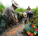 SDG Report Cover.jpg