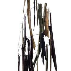 Nature Morte Mixed media on bark; steel wire 120cm(h) x 40cm(dia.) 2019