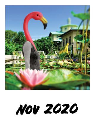 Nov 2020