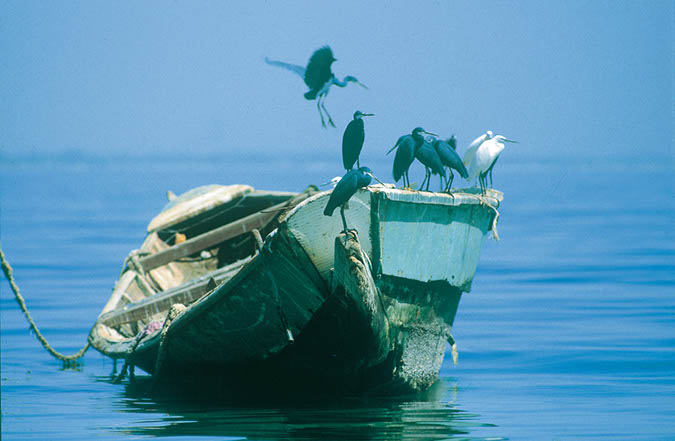 Les oiseaux de Dakar