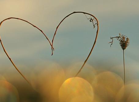 La beauté du cœur