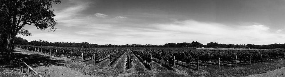 vine bw crop.jpg