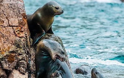 Vacances au Pérou îles Ballestas de Paracas