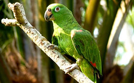 Visiter et à voir Puerto Maldonado en Amazonie