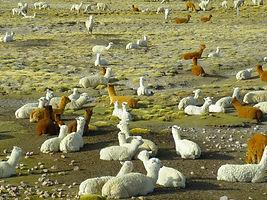 Altiplano Arequipa - Colca, à voir et à faire