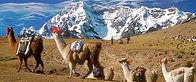 Trek de Lares au Machu Piccu, randonnée au Pérou