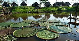 Températures et climat en amazonie au Pérou