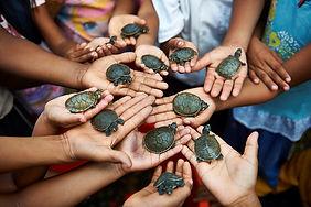 Découverte des animaux à la réserve de Pacaya-Samiria