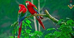 Circuit, voyage et découverte la jungle amazonienne du Pérou