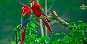 Visiter et à voirle parc du Manu en Amazonie