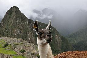 Visite du Machu Picchu au Pérou