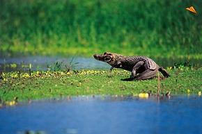 Circuit visite et découverte de Amazonie ala réserve de Pacaya-Samiria