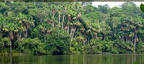 Séjour sur en Amazonie à la réserve de Tambopata