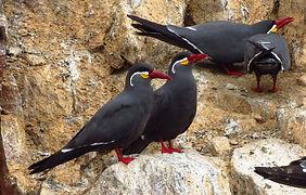 Séjour sur la cote sud du Pérou  iles Ballestas de Paracas