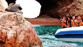 Visiter et à voir les îles Ballestas de Paracas