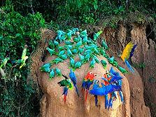 circuit découverte à Puerto Maldonado en amazonie