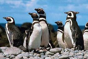 Voyage découverte Pérou  iles Ballestas de Paracas