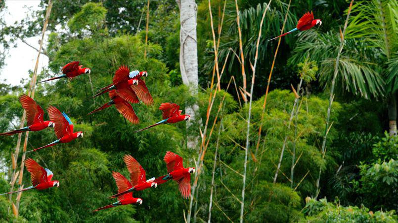 Découverte de l'Amazonie au Pérou