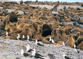 Voyage rencontre en famille aux  iles Ballestas de Paracas
