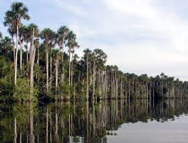 Séjour sur en Amazonie à Puerto Maldonado