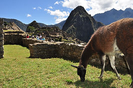 Voyage, circuit au Machu Picchu