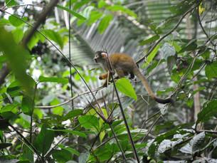 Séjour en Amazonie au Pérou
