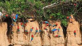 Voyage dans la jungle amzonienne au Pérou