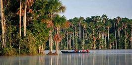 Essentiel Amazonie et jungle du Pérou