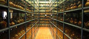 Découverte et à faire à Lima Visiter et à voir musée Larco à Lima