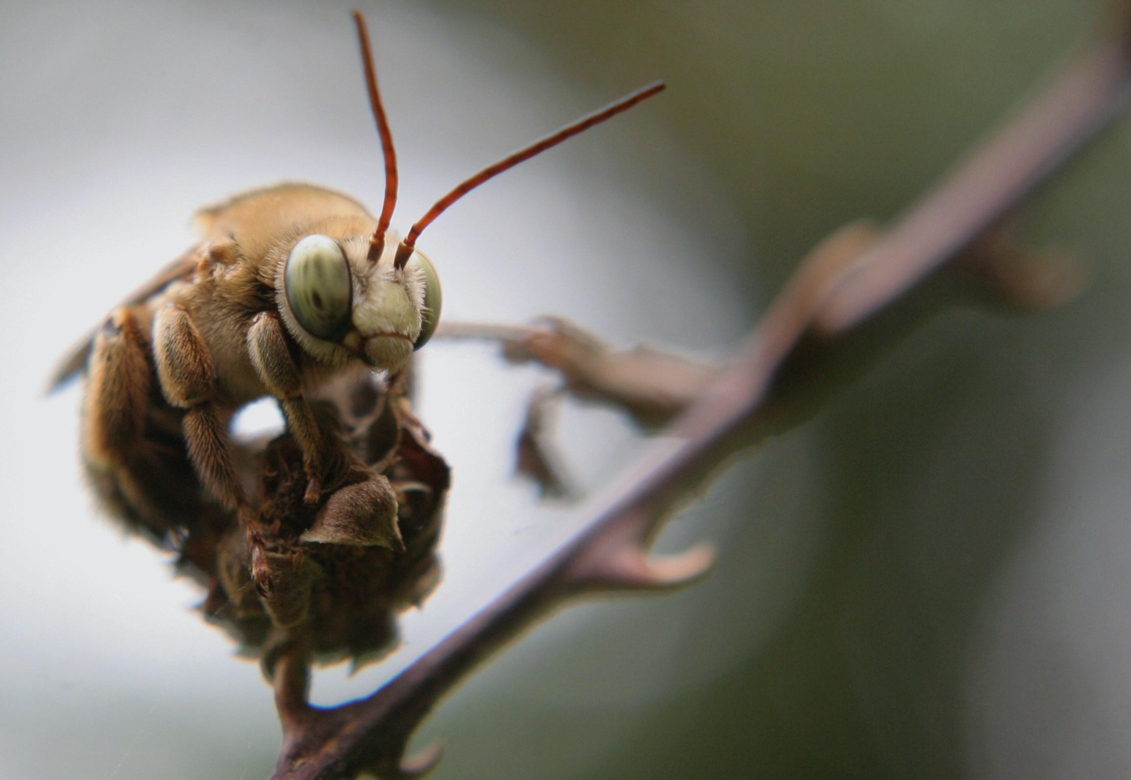 Bee Here