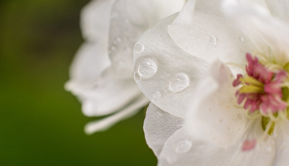 Rain Day (4).jpg