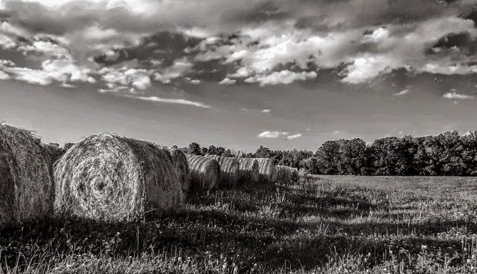 rolling hills-2.jpg