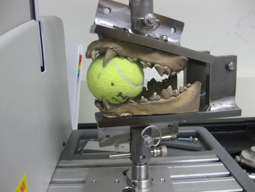 dog jaw bite machine 1