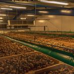 Kistenbewaring met aardappelen