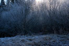 Juraglitzer-Buesche-Reif-frosty-dark.jpg