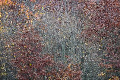 Herbstblätter-Aeste-Dunkelrot-Gelb.jpg