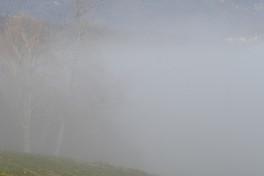 Nebel_Baum_diffus_Romantik_fog.jpg