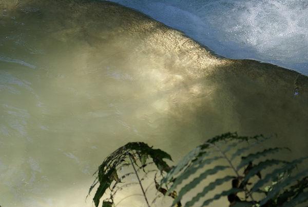 Wasser-Licht-Farn.jpg