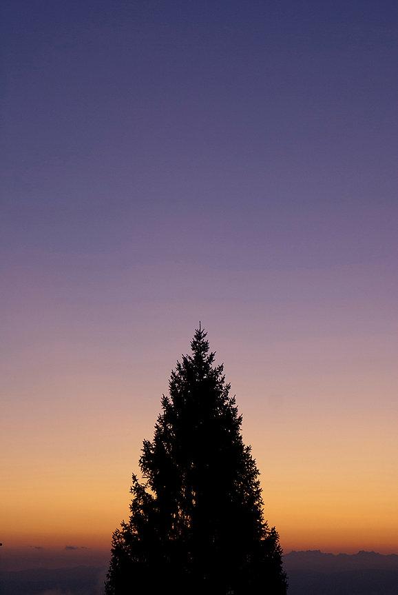 Farbverlauf-Tanne-Violett-Orange.jpg