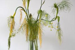 Fenchelkraut-Herbst-Gemälde-Vase.jpg