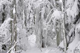 snowforest_maerchenwald_zauberhaft.jpg